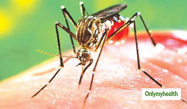 हेल्थ: एडीज के काटने से फैलता है डेंगू, समय पर इलाज जरुरी!-