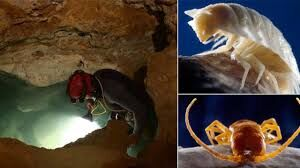 33 living creatures were discovered in a cave which was sealed off for 5 million years