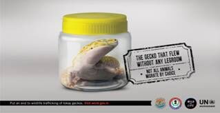 awareness campaign on illegal wildlife trade